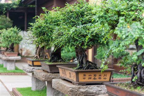 Bäume Für Japanischen Garten by Japanischer Garten