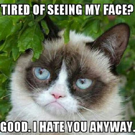 Cat Facts Meme - 17 best images about grumpy cat on pinterest crazy facts jokes and grumpy cat humor