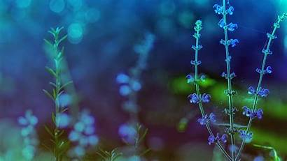 Themes Desktop Theme Backgrounds Background Wallpapers Flowers