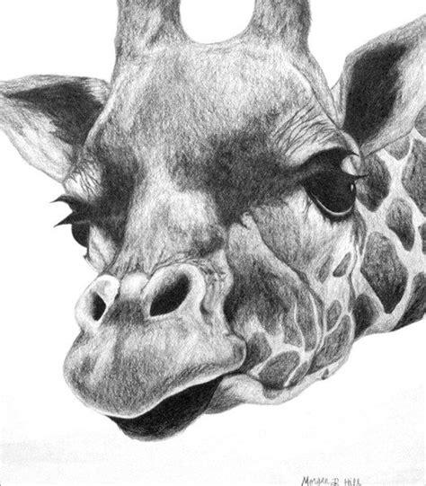 giraffe drawing ideas  pinterest cute giraffe