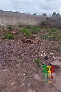 Terrain A Vendre Pas Cher : vente terrains yirimadio tdi7049 terrain pas cher vendre yirimadio bamako mali ~ New.letsfixerimages.club Revue des Voitures