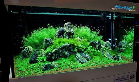 Oliver Knott Aquascaping - aquascaping