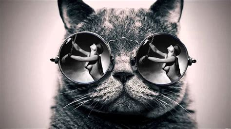 Cool Cat With Glasses Wallpaper Cat 39 S Glasses Youtube