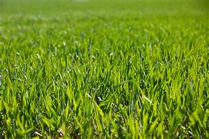 Green Grass Free Stock Photo - Public Domain Pictures