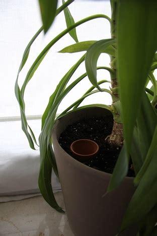 Zimmerpflanzen Im Urlaub Bewässern by Im Urlaub Pflanzen Bew 228 Ssern Tipps