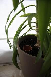 Pflanzen Bewässern Mit Plastikflasche : im urlaub pflanzen bew ssern tipps ~ Frokenaadalensverden.com Haus und Dekorationen
