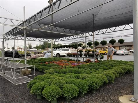 collegeville pennsylvania retail company mums weekly fresh