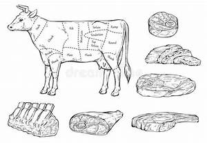 Meat Diagram Cow Engraving Vector Stock Vector