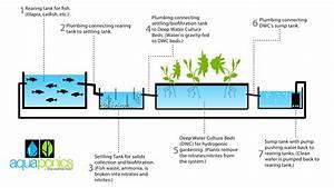 Aquaponics Vs  Hydroponics Vs  Ecoponics