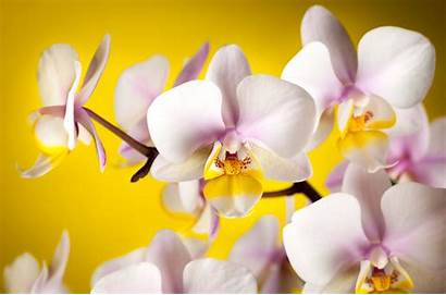 Orchid Flower Flowers 4k Earth Background Wallpapers