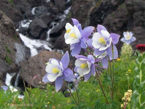 plants of mountains alpine life zone plants