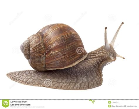 Tierra Garden by Land Snail Royalty Free Stock Image Image 31530276