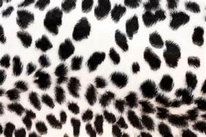 Cheetah print wallpaper, black and white cheetah black and ...