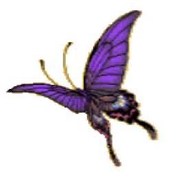 Butterflies GIF Transparent
