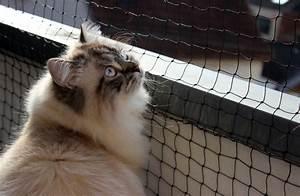 Balkonschutz Für Katzen : fensterschutz und balkonschutz f r katzen ~ Eleganceandgraceweddings.com Haus und Dekorationen