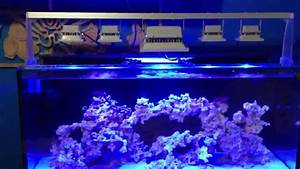 Best Aquarium Lights Reef Tank Led Flood Lights Youtube
