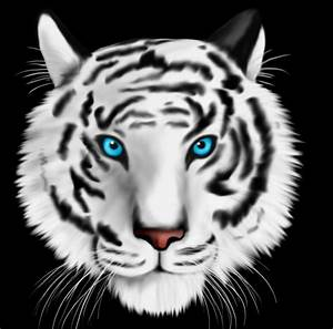 White Tiger With Blue Eyes Wallpapers Phone > Minionswallpaper
