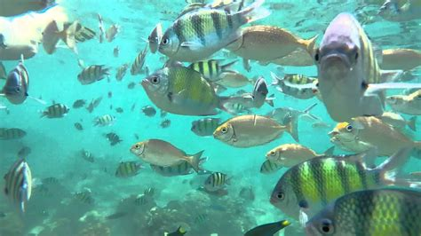 Snorkeling In Phi Phi Islands Thailand Youtube