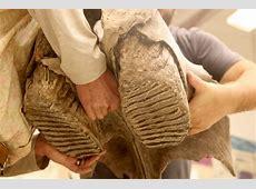 A mammoth find in Sequim Burke Museum