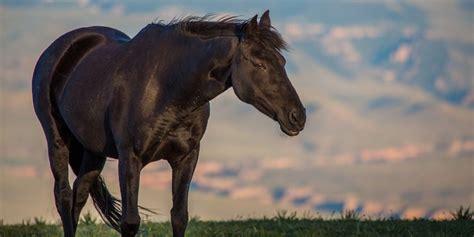 horse mustang endurance breeds