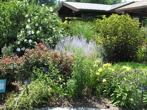 top landscaping plants landscaping