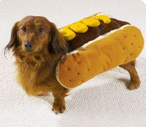 Dachshund Puppies In Hot Dog Bun | www.pixshark.com ...