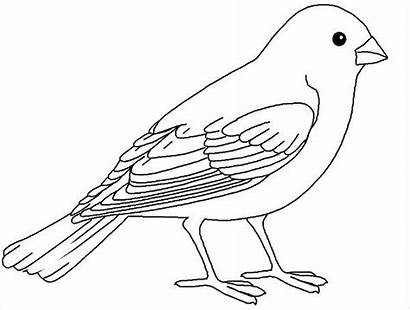 Bird Coloring Realistic Pages Colored