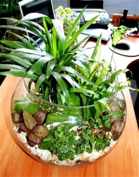 Pflanzen Für Miniaturgarten by Zimmer Und Gartenblumen
