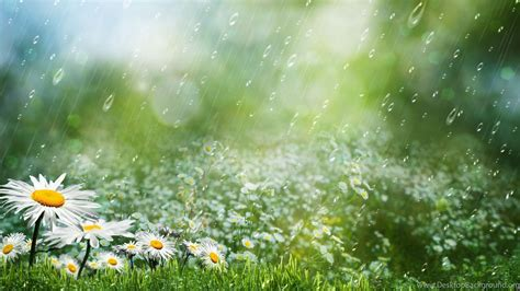 summer rain hd wallpaper summer rain images