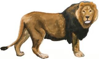 How to Draw Lions Drawing