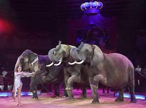 Krone Wieder Befestigen Abrechnung : cham freude bei zirkusfans cham steht wieder auf dem ~ Themetempest.com Abrechnung