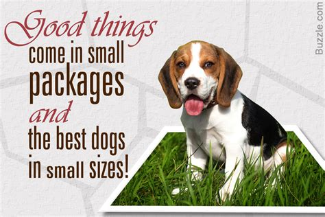 99+ Cute Small Dogs Cutest Dog Breeds That Stay Small. 25 ...