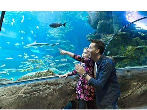 sea aquarium prices sea aquarium tickets facts deals and general info time out