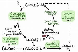 USMLE Day 1: Biochem Makes Me Feel Like Michelangelo ...