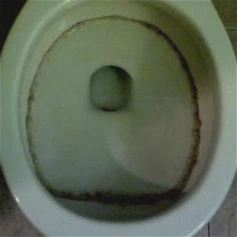 water ring toilet bowl remove black mold from toilet bowl tank and seat