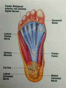 Diagram  Top Of Foot Pain Diagram