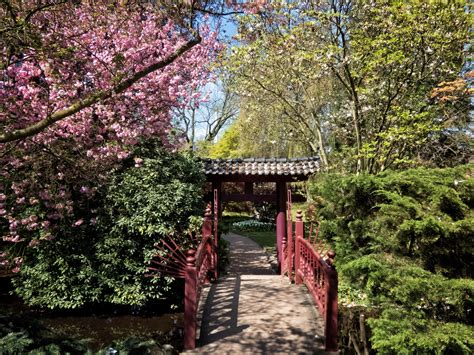 Japanischer Garten Leverkusen Kirschblüte by Japanischer Garten Leverkusen Foto Bild Natur