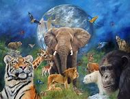Wild Animals Planet Earth