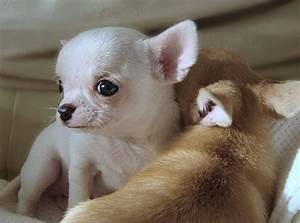 cute baby dogs puppies image search results