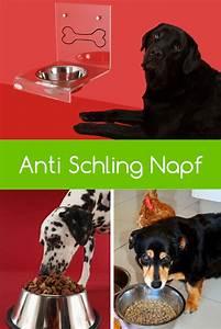 Anti Schling Napf Hund : der anti schling napf sorgt f r mehr genuss beim hund hunde hunde ern hrung und fressnapf hund ~ Watch28wear.com Haus und Dekorationen