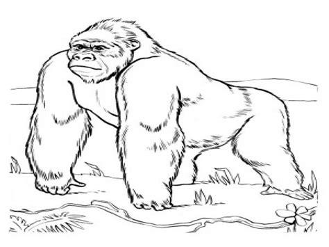 Gorilla Coloring Page 507