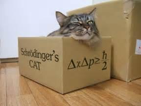 shrodingers cat save schr 246 dinger s cat dead or alive heinakroon