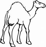 Camel Coloring Pages Face Printable Clipart Drawing Colouring Template Animals Oasis Desert Animal Colornimbus Mask Clip Getdrawings sketch template