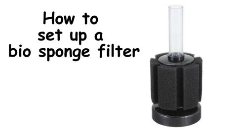 Easy Step By Step Guide On How To Set Up A Bio Sponge