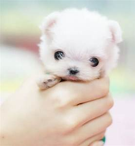 Funz -Funz: Very Cute Little Puppies