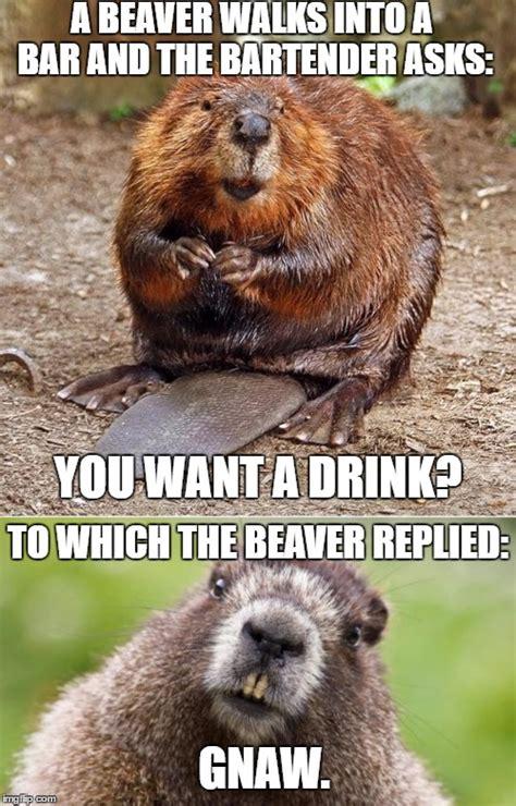 Beaver Meme - beaver imgflip