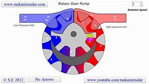 Internal Gear Pump Animation