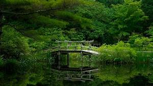Nature, Bridge, Trees, Wallpapers, Hd, Desktop, And, Mobile