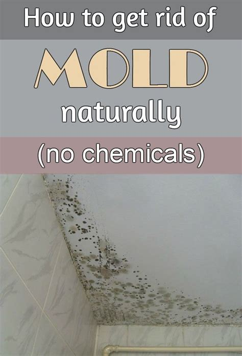 how to get rid of mold naturally without chemicals