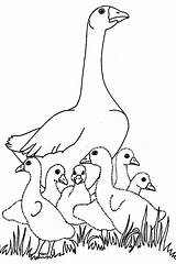 Coloring Pages Geese Coloringpages1001 Goslings sketch template
